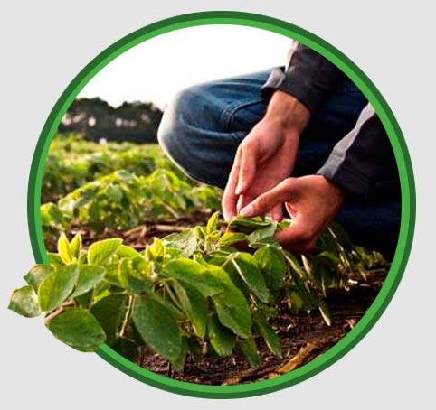 proteccion-de-cultivos